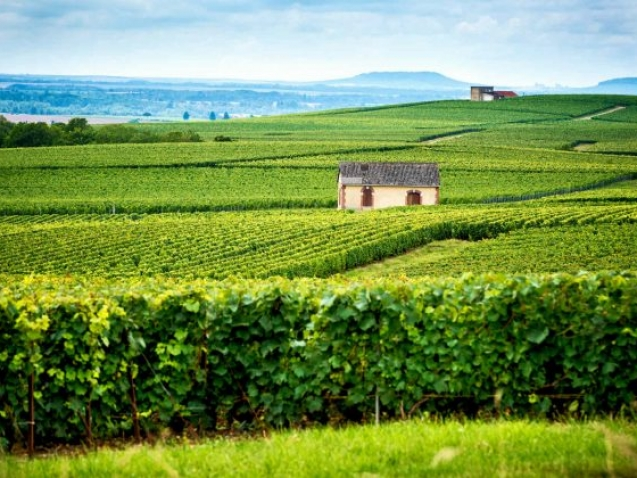 champagne-reims-france-shutterstock_1067026169-660x420