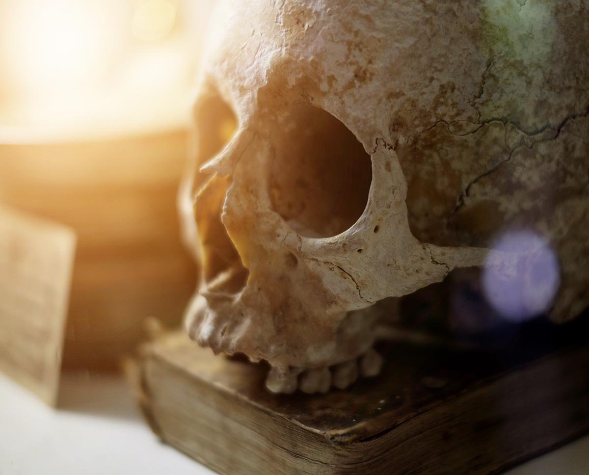 Skull and old book